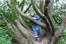 Mark Hazleton up a tree in Blarney
