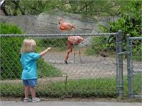 Marlis checks out the flamingos