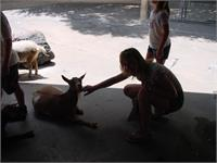 Monica pets the goats