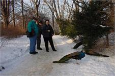 Picture with peacock on the Warsaw tour, a very cold peacock.