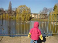 Marlis Hazleton checks out the ducks in the pond in the park across the street from the new Hyatt in Warsaw