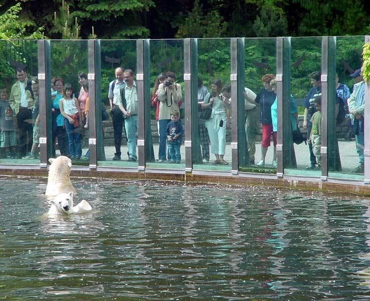 A view of the polar bear encounter area, with the glass, they come right up to meet you.