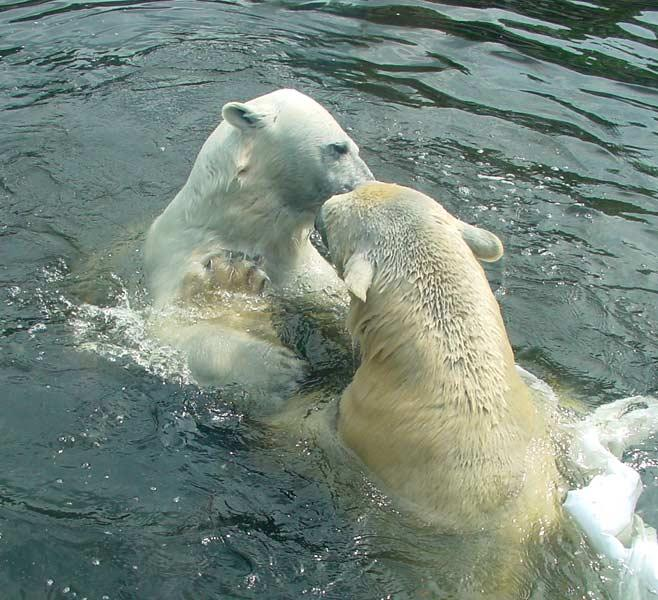 A highlight of our visit to the Berlin Zoo was the polar bear exhibit.