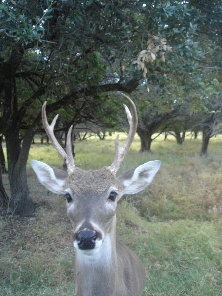 white-tail-deer-at-fossil-rim